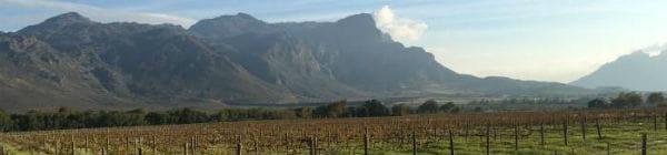 Der er mange vinmarker i Sydafrika
