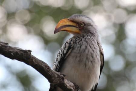 Krüger Nationalpark i Sydafrika kan besøges året rundt