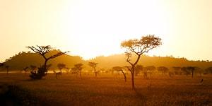 Savanne i Tanzania