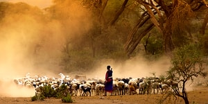 Der er mange forskellige dyr på Tanzanias savanner