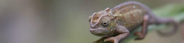 Tanzanias vådområder såsom Victoriasøen befinder der sig mange forskellige dyr