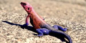 Du kan opleve mange forskellige dyr ved Victoriasøens bred på din rejse til Tanzania