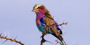 En rejse til Victoriasøen i Tanzania er en rejse til et smukt dyreliv