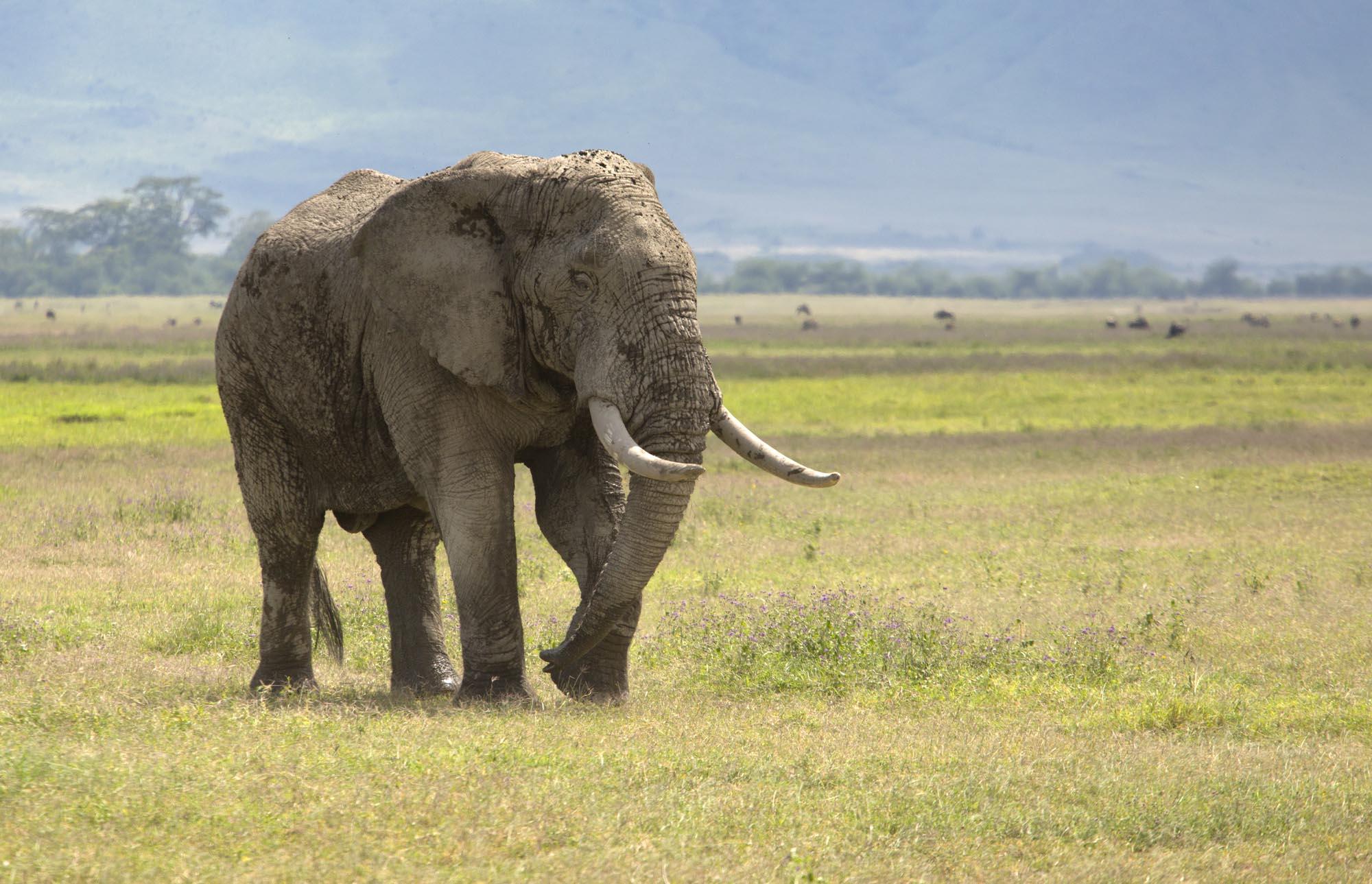 Ved højsletterne i Tanzania er klimaet tropisk