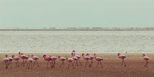 Rejs til Tanzania og se de smukke flamingoer