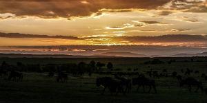 Flot solnedgang over NgoroNgoro nationalpark i Tanzania