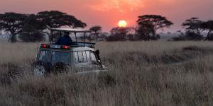 Oplev safari fra Jeep på Tanzanias smukke savanner