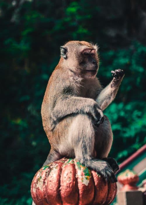 Borneo rejser er en rejse til et land med mange aber
