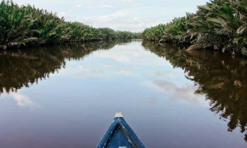 På en rejse til Borneo kan du sejle ned ad de mange floder