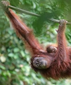 Tag på rundrejse til Borneo