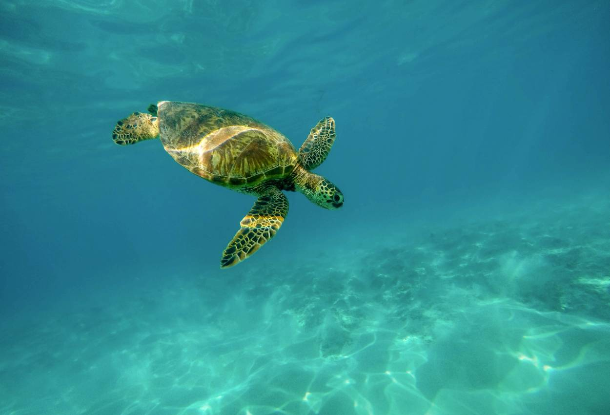 Støt Turtle Island og havskildpadderne på din Borneo rundrejse