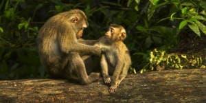 Se aber på din rejse til Borneo