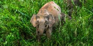 Vi har Borneo rejser til områder med elefanter
