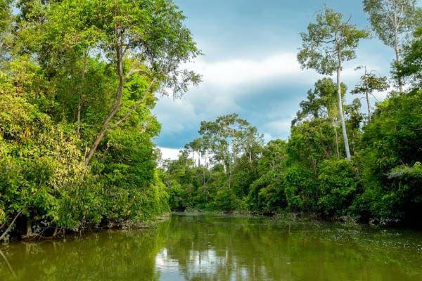 Oplev Kinabatangan floden på din rejse til Borneo