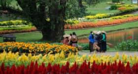Smukker blomster i park i Burma