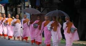 Unge munke går på række i Burma