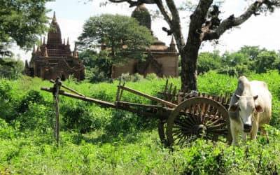 I Myanmar bruges valutaen Kyat