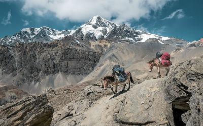 Pakæsler på bjergbestigning i Nepal