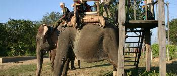 Elefantsafari i Nepal