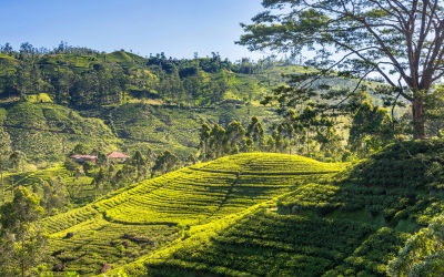 Hatton er et fantastisk sted at trekke på din rejse til Sri Lanka