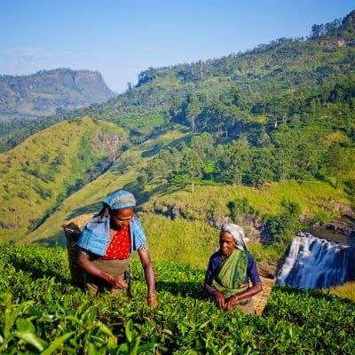 Du kan rejse til Sri Lanka hele året rundt, for her er ingen højsæson