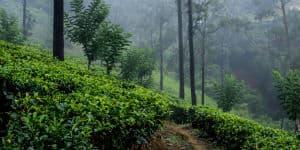 Rejser til Sri Lanka byder på et tropisk klima