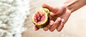 Jaya Sri Maha Bodhi er et helligt figentræ i Sri Lanka