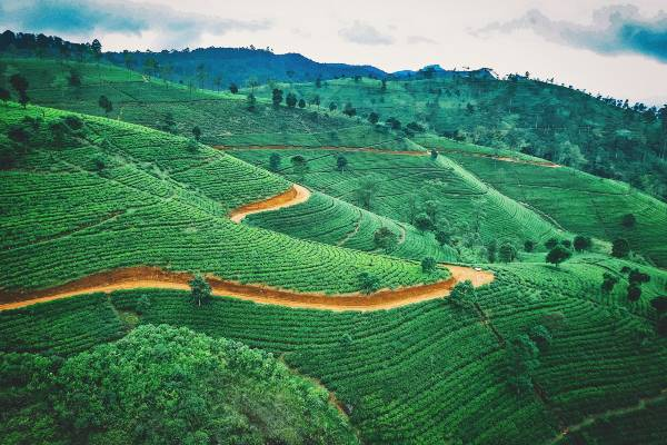 Kombiner din rundrejse i Sri Lanka med et trek gennem det smukke landskab