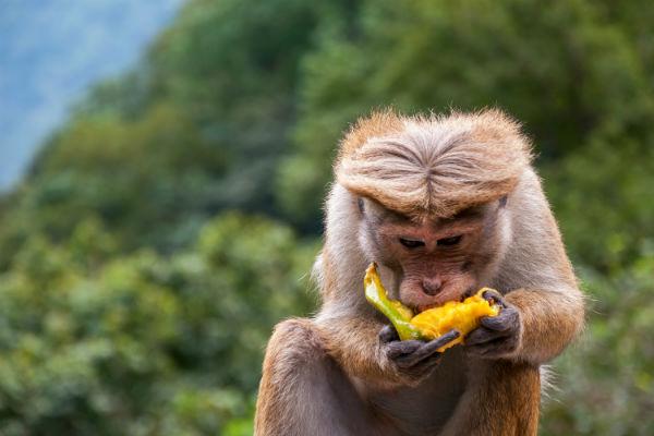 Tag på safari rejse til Sri Lanka