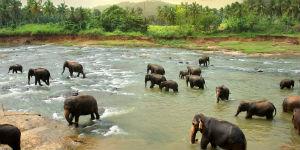 Sri Lanka rejser er kendt for at lade dig komme tæt på elefanter