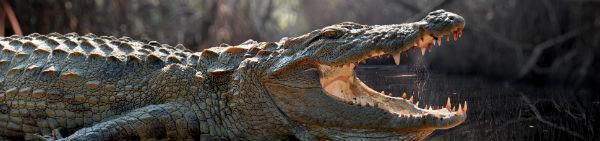 Oplev krokodiller på Sri Lanka