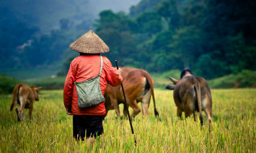 Den officielle sprog i Vietnam er vietnamesisk