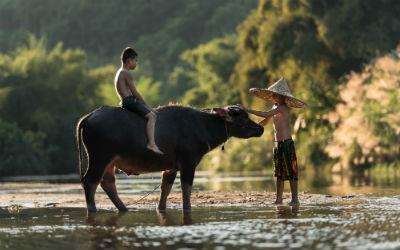 Rejser til Sapa i Vietnam