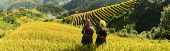 Rismark i Vietnam