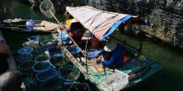 Se hvordan vietnameserne handler fra båd til båd på Ha Long Bugten
