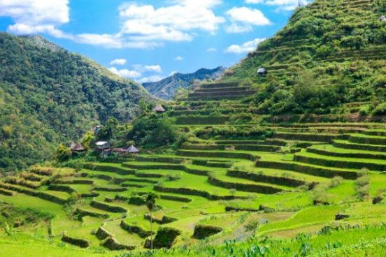 Rismarker i Vietnam