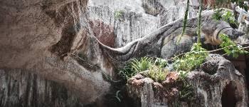 Der er mange nationalparker i Vietnam