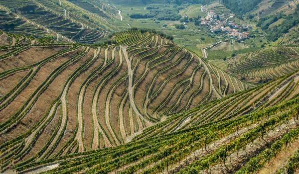 Oplev sukkerfarme på din rejse til Portugal