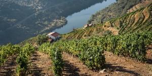 Oplev sukkerfarme på din rejse i Portugal