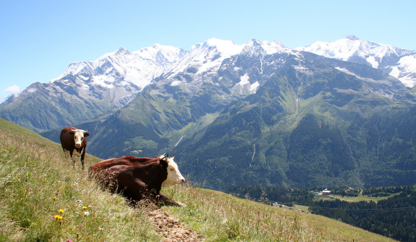 I Contamines nær Mont Blanc kan man smage fremragende oste
