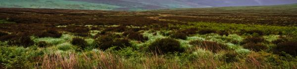 Oplev Wicklow ruten på din rejse til Irland