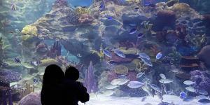 Oplev Bergen Akvarium på din rejse til Norge