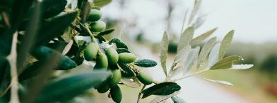 Besøg La Organic Experience på din rejse til Spanien