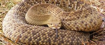 hvilke dyr spiser slanger