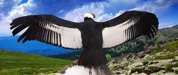 danmarks største fugl