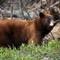 Rejs til Costa Rica og oplev bjørnen