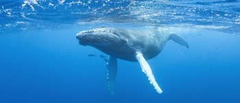 Hvad ser sæd hvaler ud