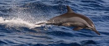 iggfflel delfiner det eneste dyr udover mennesker der har sex for sjov