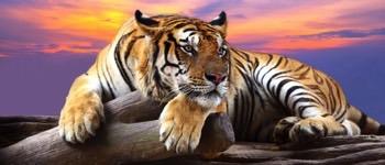 praktisk info kiplings eklode ezoo tigeren