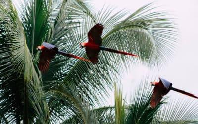 Rejs til Costa Rica og oplev et fantastisk dyreliv